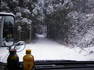 しどきの林道