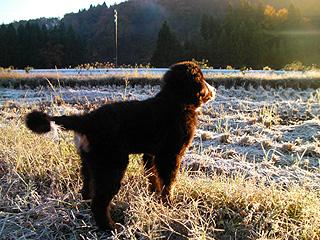 霜を見つめるウトロン