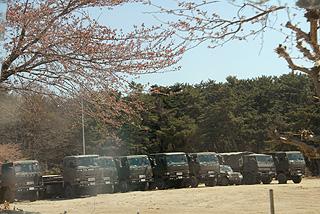 自衛隊と桜