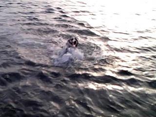 危うく溺れる