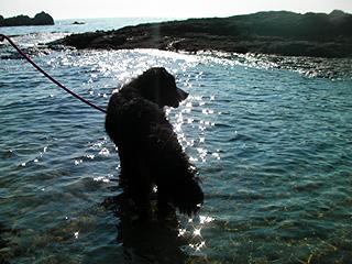水辺を散歩