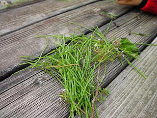 草のパスタ